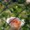 Seminario: Rimedi eco-biologici nella pratica degli orti